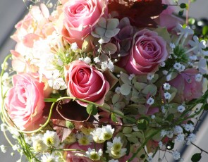 128_La-Belle-Rose_1270px